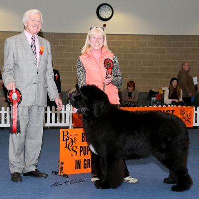 Kalibah Best Of British winning the Puppy Working Group at Boston