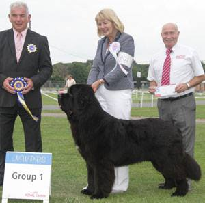 New Angels Myguy at Millthorpe winning Reserve Best Puppy in Show at National Working & Pastoral Breeds Society