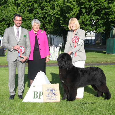 New Angels Myguy at Millthorpe winning Best Puppy in Show at Three Counties