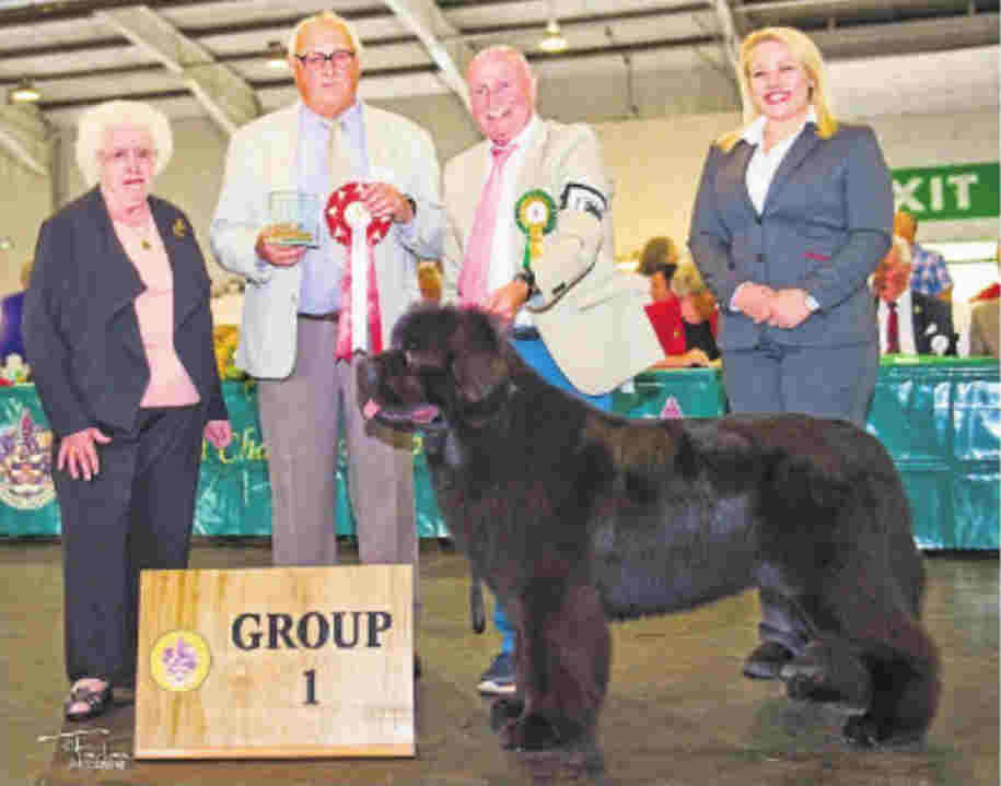 Merrybear D'Artagnan, winner of Working Group at Paignton & District Fanciers' Association 2016