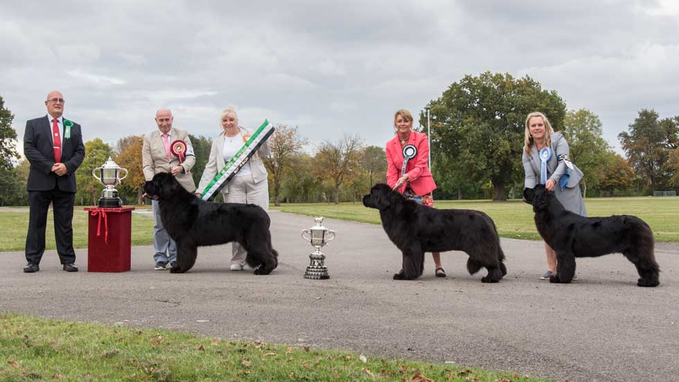 Newfoundand winners line-up from the Newfoudland Clubs Championship Show, October 2016