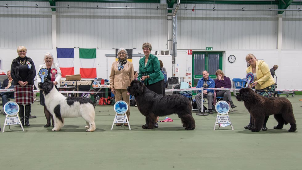 Winners at the SNC Open Show in November 2015