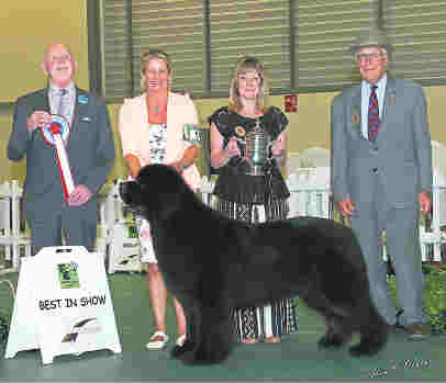 Ch. Sandbears Better Than Ever, JW as Best In Show at East Of England Agricultural Society 2016