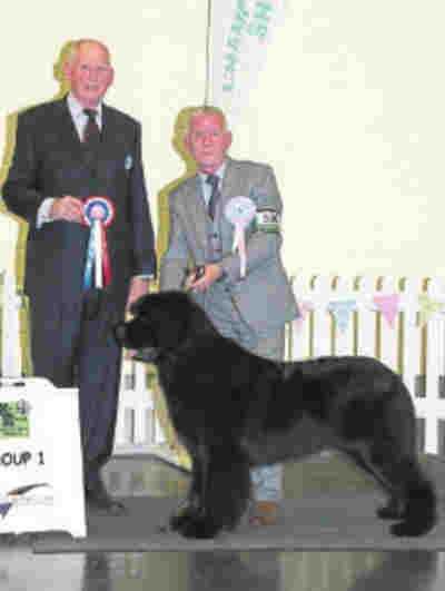 Sandbears Master Mexico at Queenbears, winner of Working Group Puppy at East Of England Agricultural Society 2016