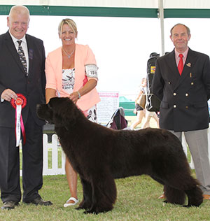 Sandbears Mister America, winner of Working Group Puppy at Bournemouth Canine Association 2016