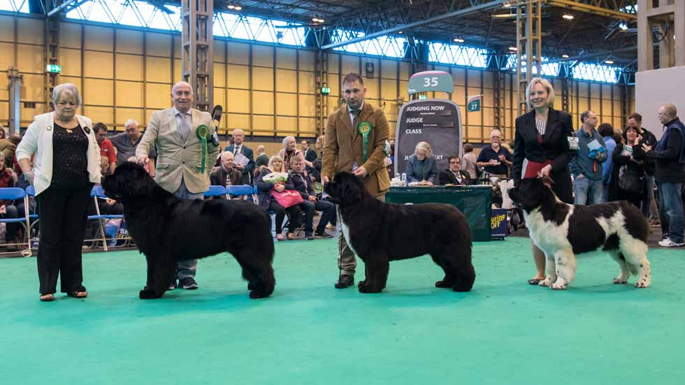 Newfoundland winners line-up at Crufts, March 2017