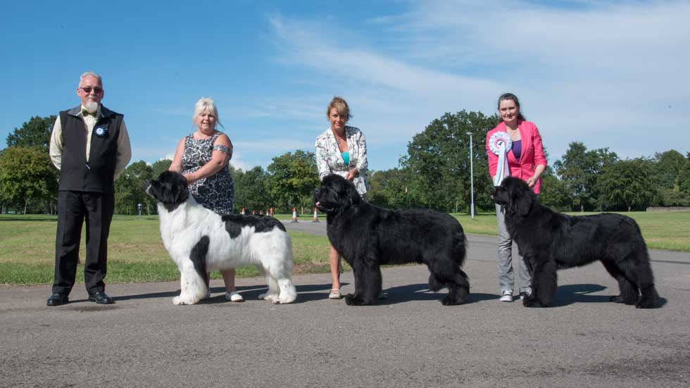 Newfoundland winners line-up from the Northern Newfoundland Club Open Show, August 2017