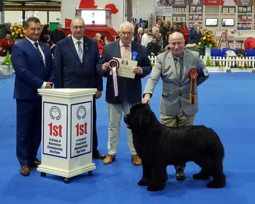 Ch. Nandobears I'm What I'm Camnoire JW ShCM winning the Working Group at Manchester Dog Show Society