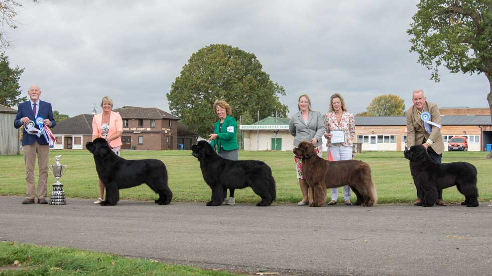 Newfoundland winners line-up from the Newfoundland Club Championship Show, October 2018