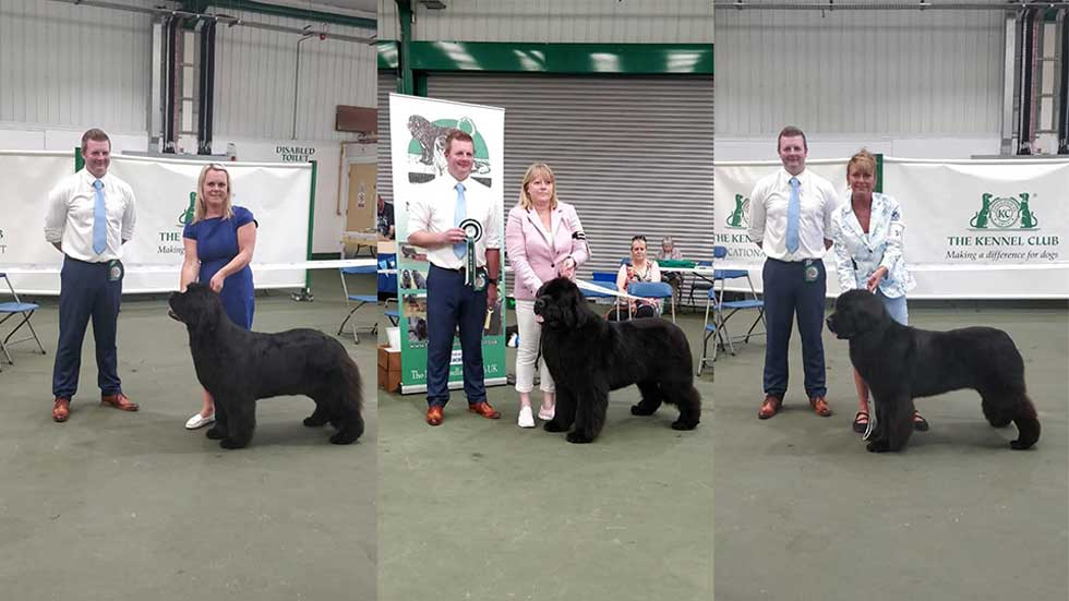 Newfoundland winners line-up from the Newfoundland Club Open Show, August 2018