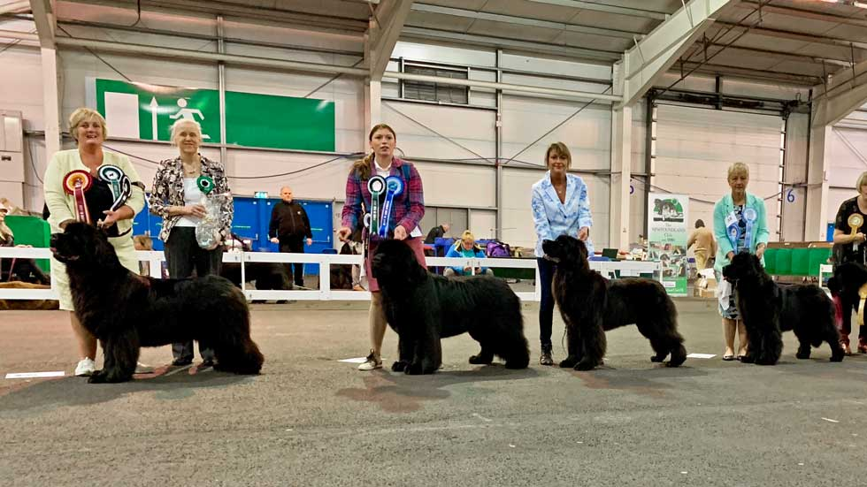 Newfoundland winners line-up from the Newfoundland Club Open Show (at W&PBAoS), November 2018
