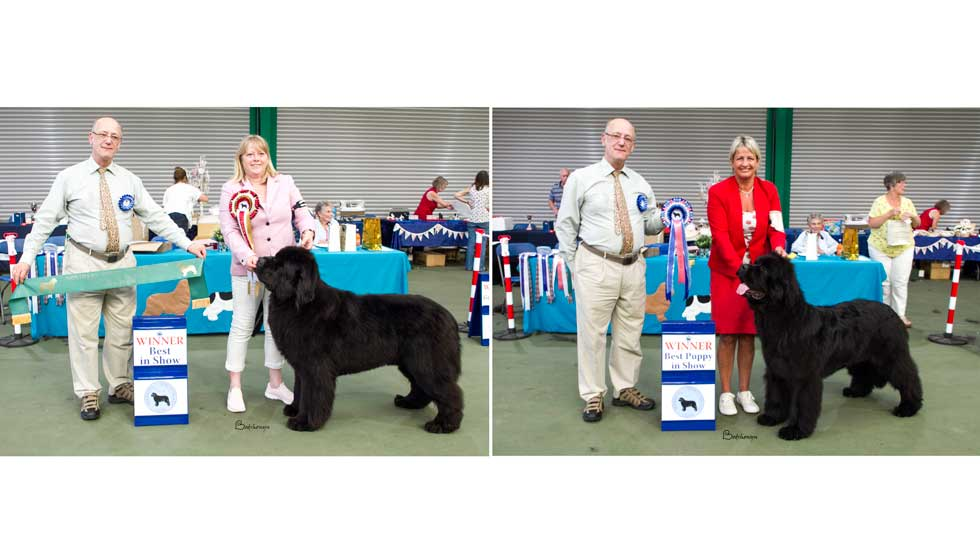 Newfoundland winners line-up from the Northern Newfoundland Club Open Show, August 2018