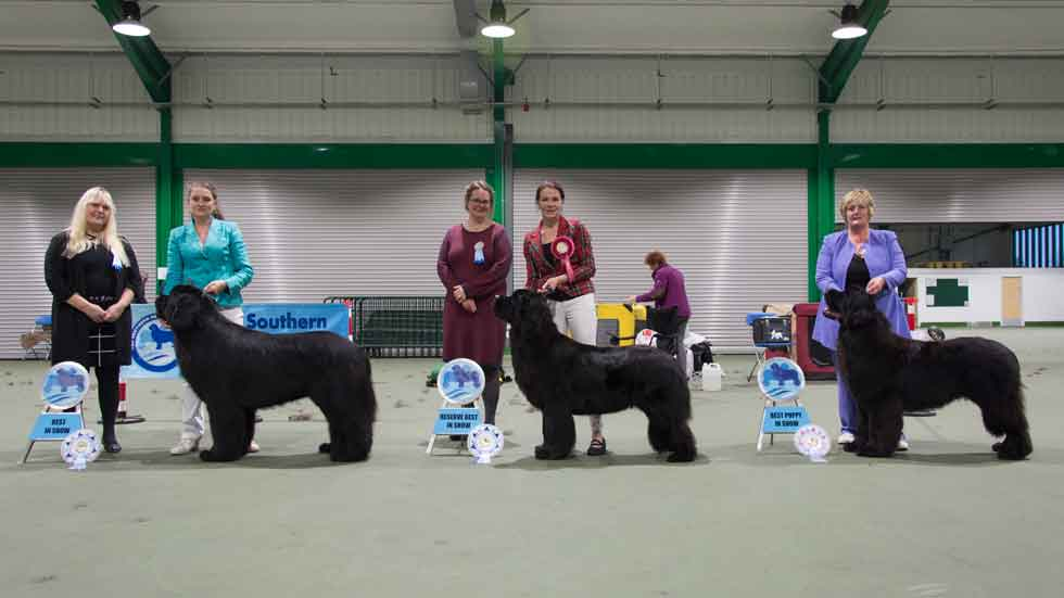 Newfoundland winners line-up from the Southern Newfoundland Club Championship Show, November 2018
