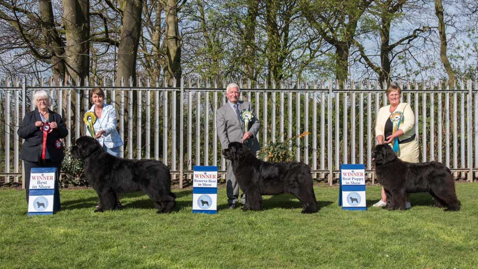 Newfoundland winners line-up from the Northern Newfoundland Club Championship Show, April 2019