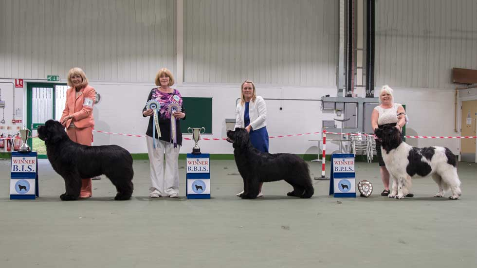 Newfoundland winners line-up from the Northern Newfoundland Club Open Show, August 2019
