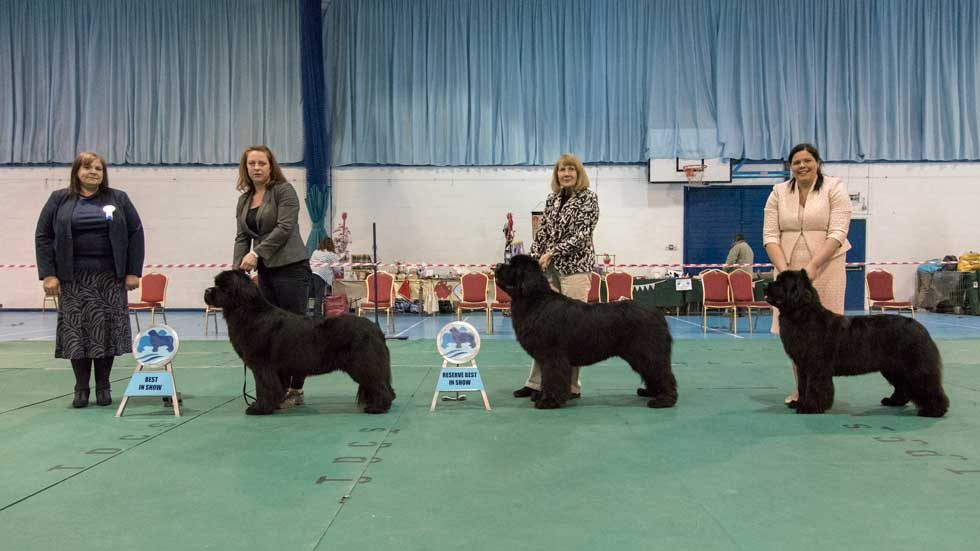 Newfoundland winners line-up at the Southern Newfoundland Club Open Show, May 2019